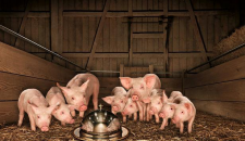 Just Absurd: like feeding the pigs tablescraps under a cloche